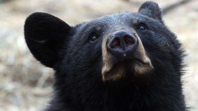 Bear-Generic_400670