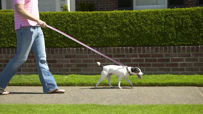 dog walker_456872