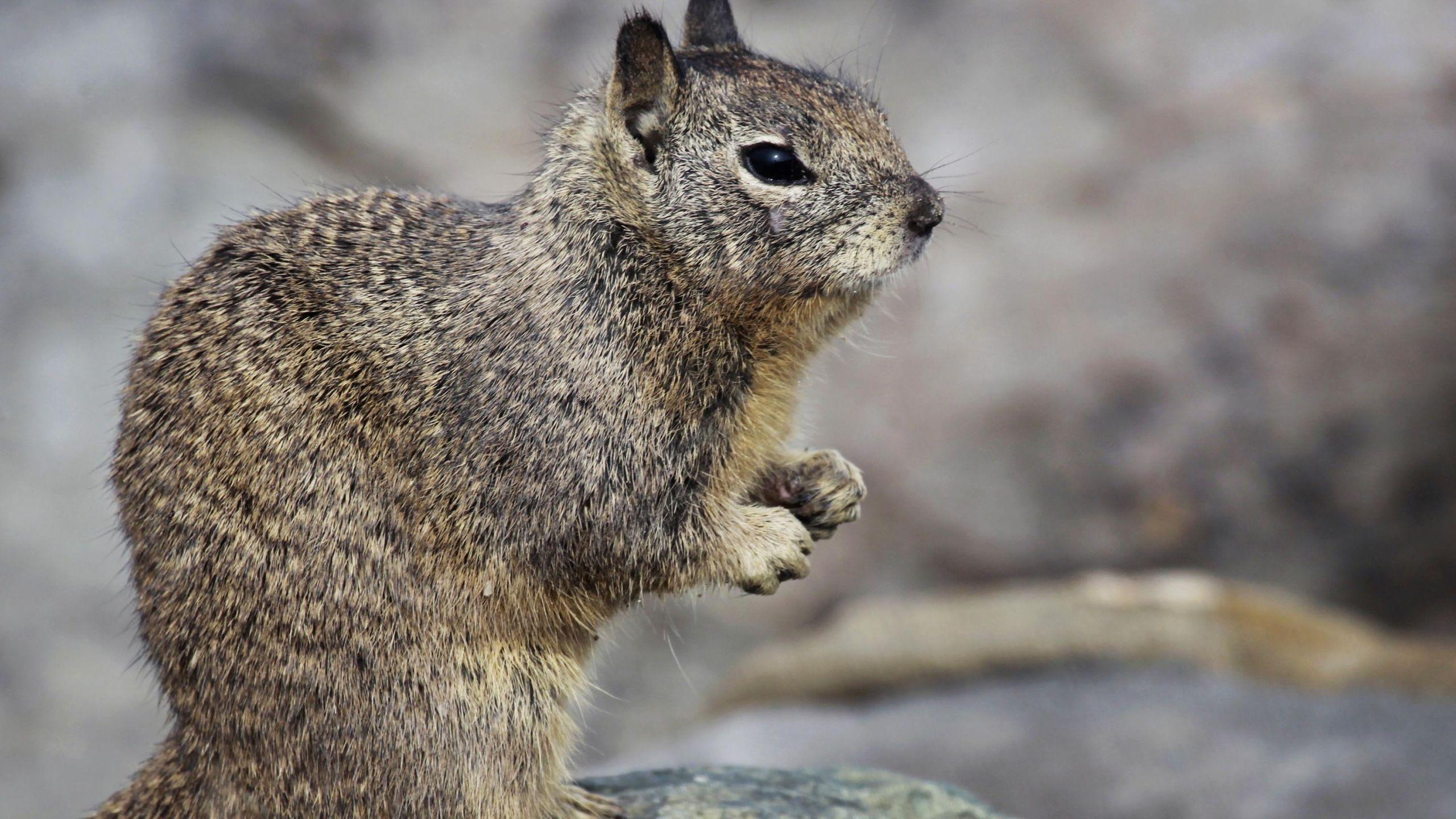 squirrel_494433