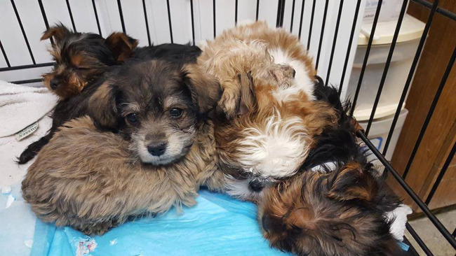 rescued-puppies_532525