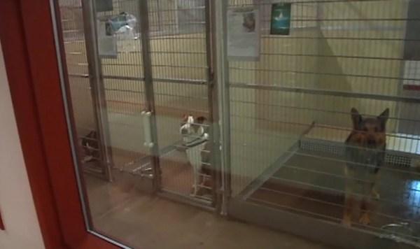 animal-shelter_542045