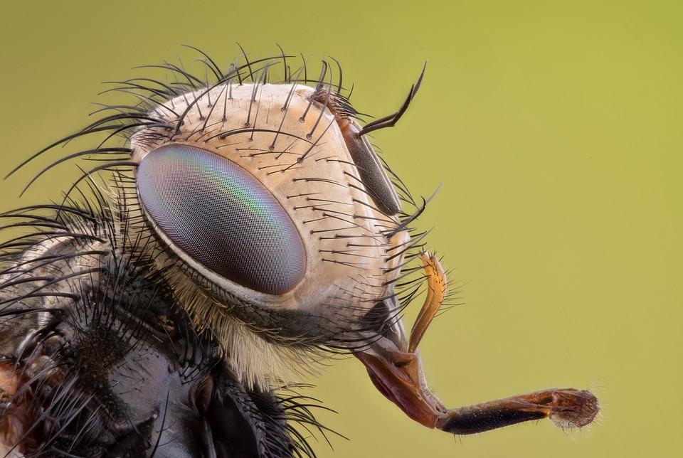 Bugs_567083