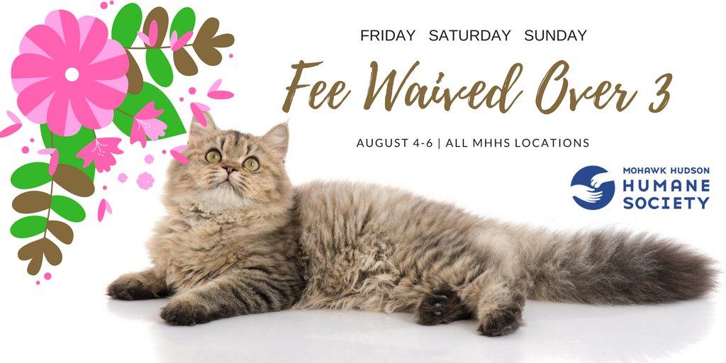 Cat fees_615900