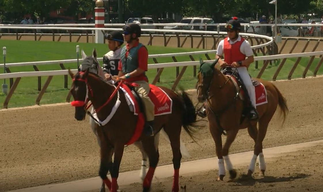 saratoga race horse_625115