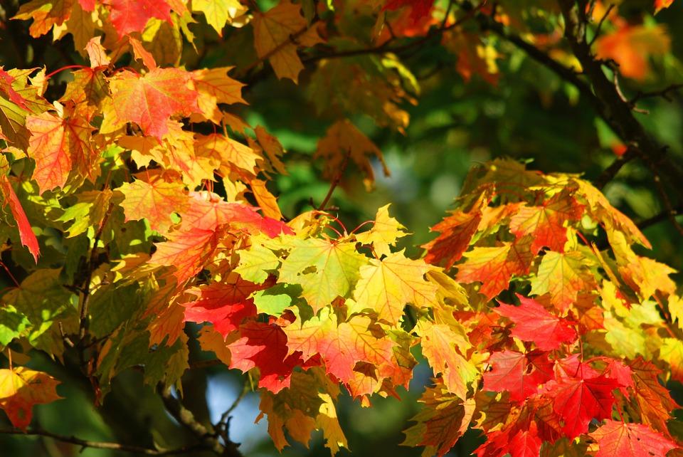 Fall Foliage generic