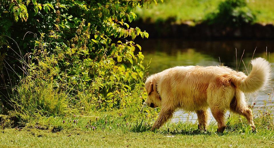 Dog Walking_627817