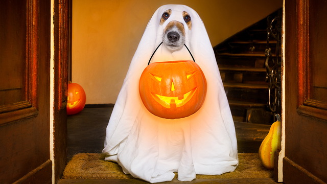 Halloween Ghost Dog Trick Or Treat_650237