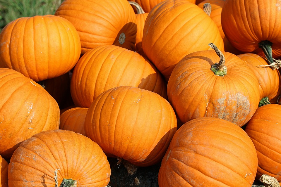 Pumpkins_643673
