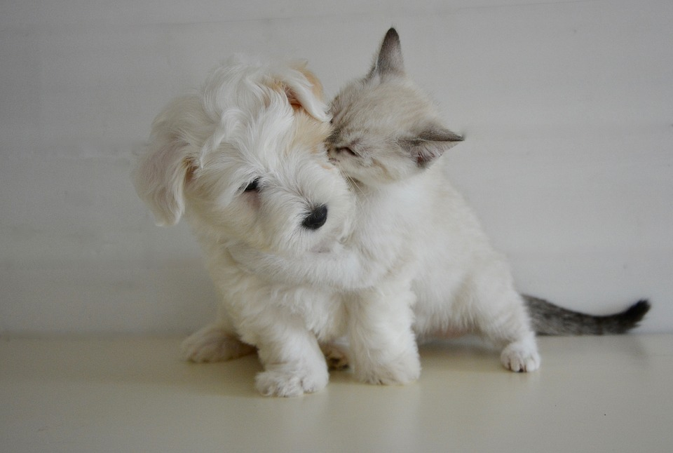 Kitten and Puppy_666451