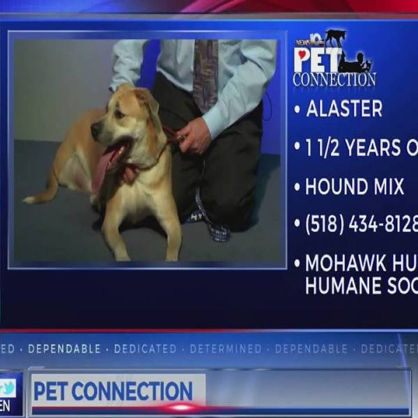 PET CONNECTION - ALASTER 2-26-18_705330