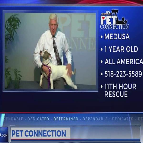 PET CONNECTION MEDUSA 2-16-18_700611