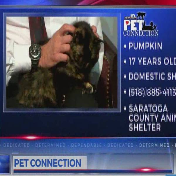 PET CONNECTION PUMPKIN 2-23-18_704063