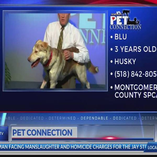 PET CONNECTION BLU 3-1-18_706749