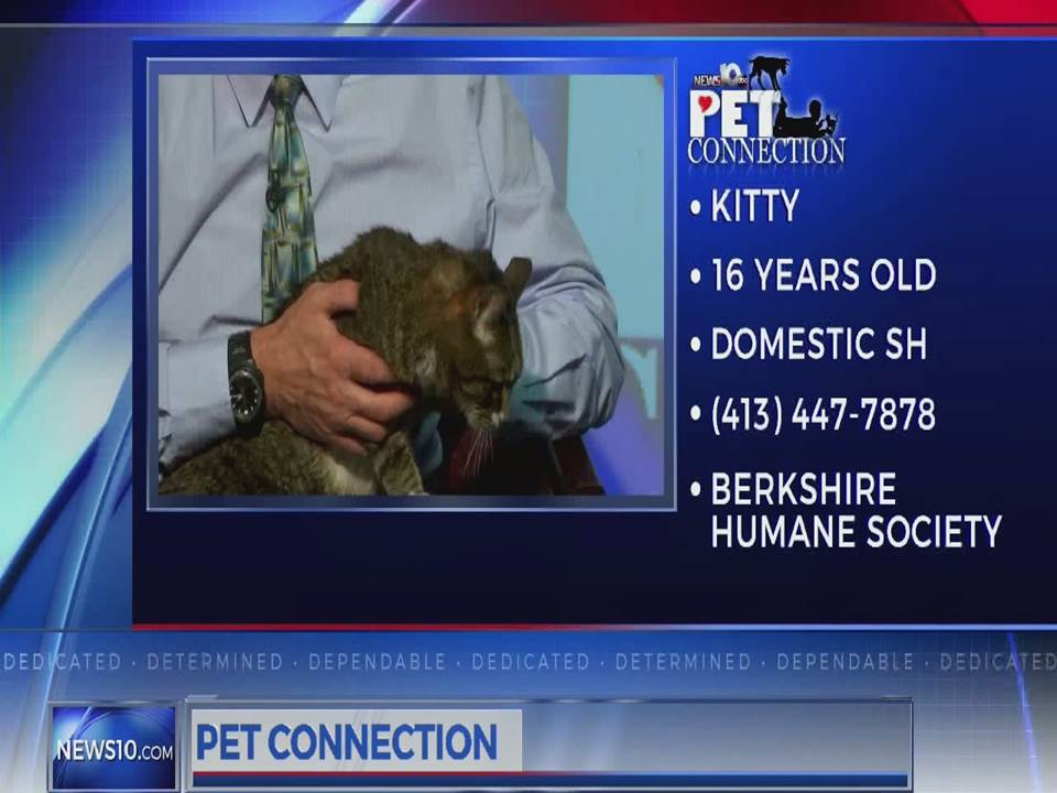 PET CONNECTION KITTY 3-12-18_711387