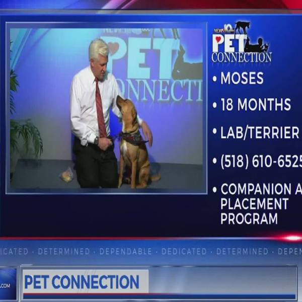 PET CONNECTION MOSES 3-9-18_710320