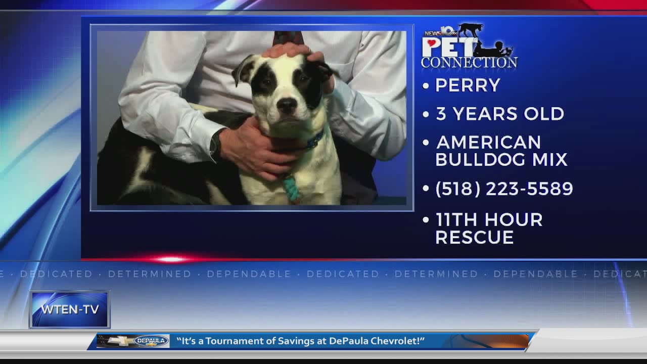 PET CONNECTION PERRY 3-16-18_713199