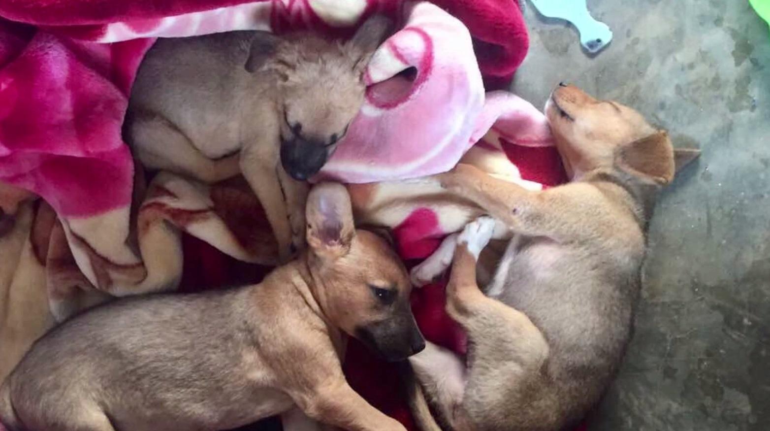 uganda puppies kelsey sabo_1527114989876.jpg.jpg