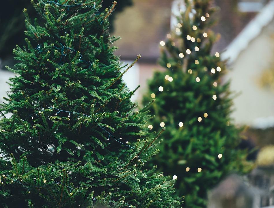 Christmas trees_672471