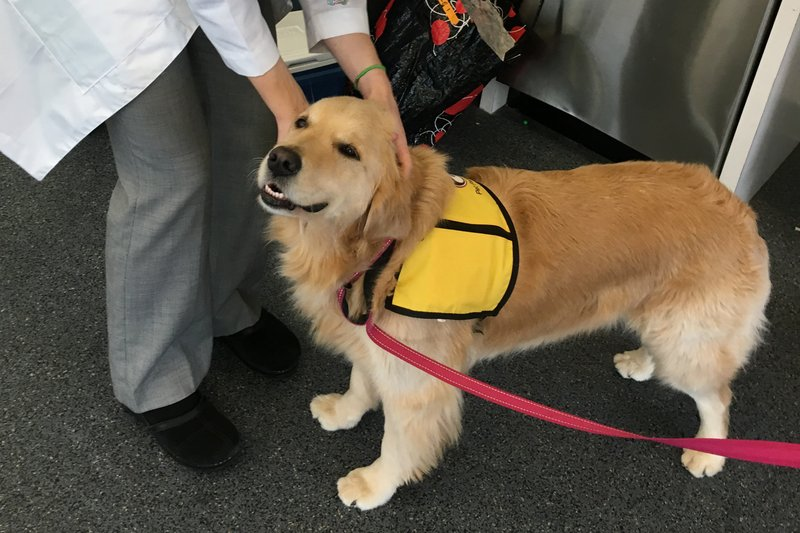 therapy dog ap_1538783366200.jpeg.jpg