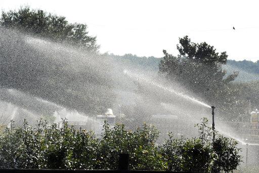 sprinklers spray on plants