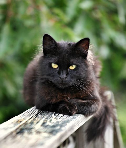 October 27 is National Black Cat Day