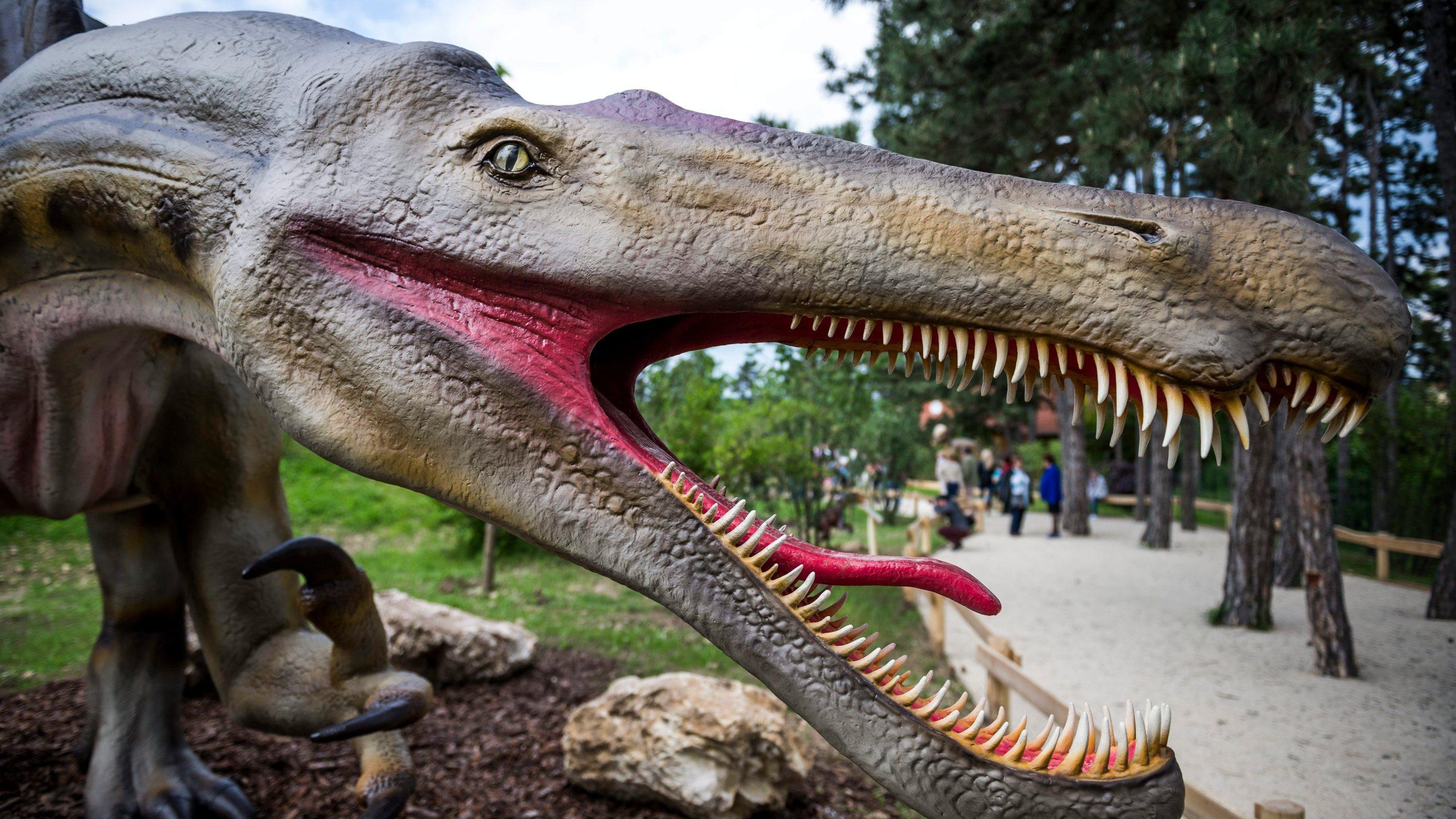 Life sized Spinosaurus head