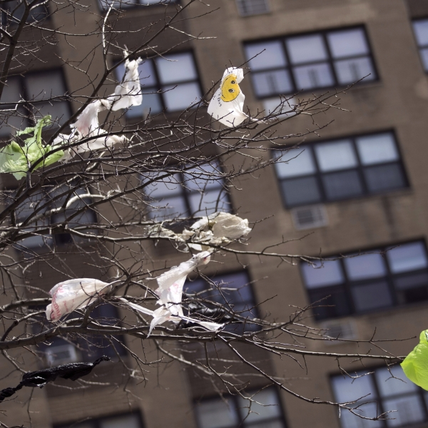 plastic bags stuck in tree