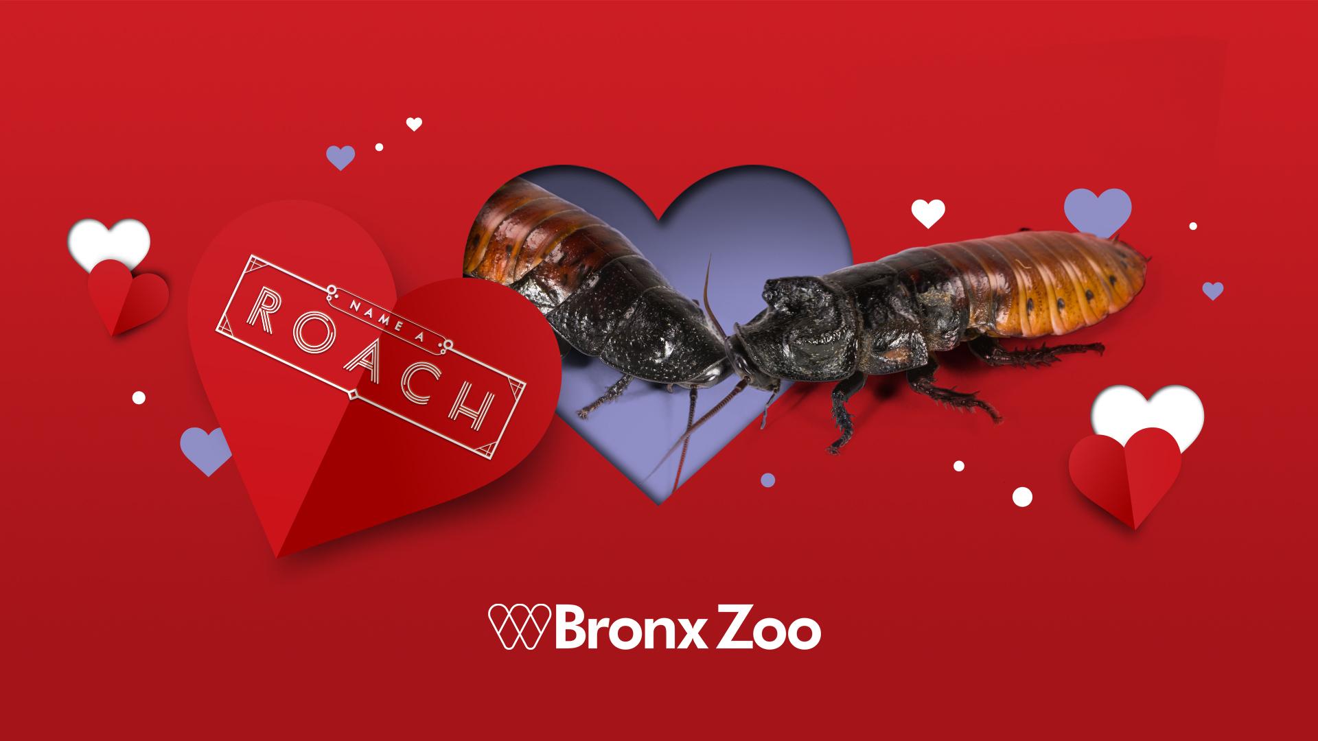 roach valentine