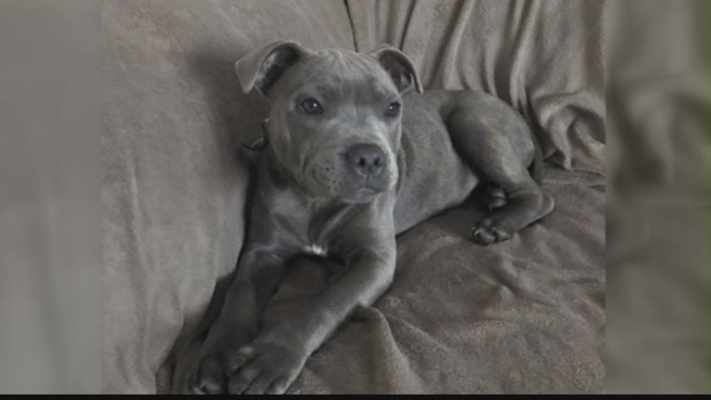 Local Woman Says She Lost 1 600 In Alleged Puppy Scam