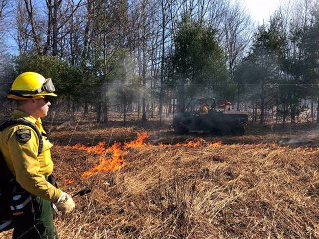 Forest ranger at prescribed burn