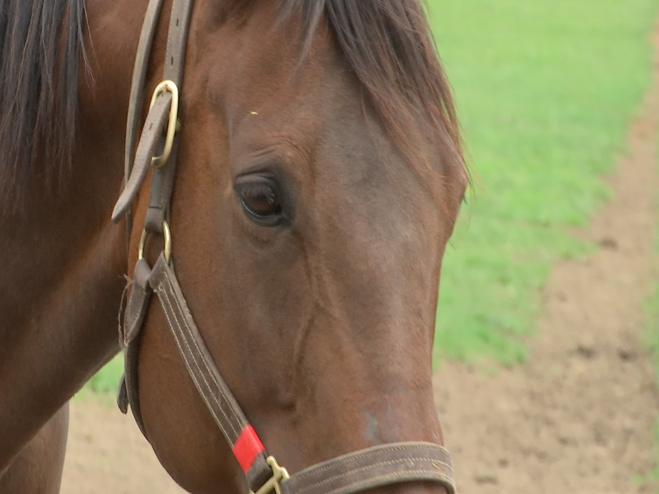 Saratoga Race Course Opens This Summer Without Fans