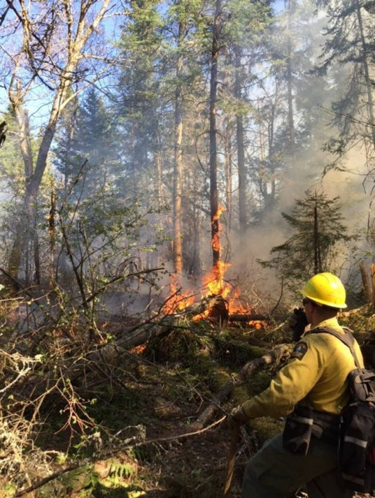 Forest ranger fights forest fire