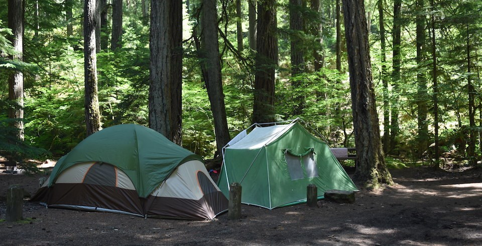 tents in a forest clearing