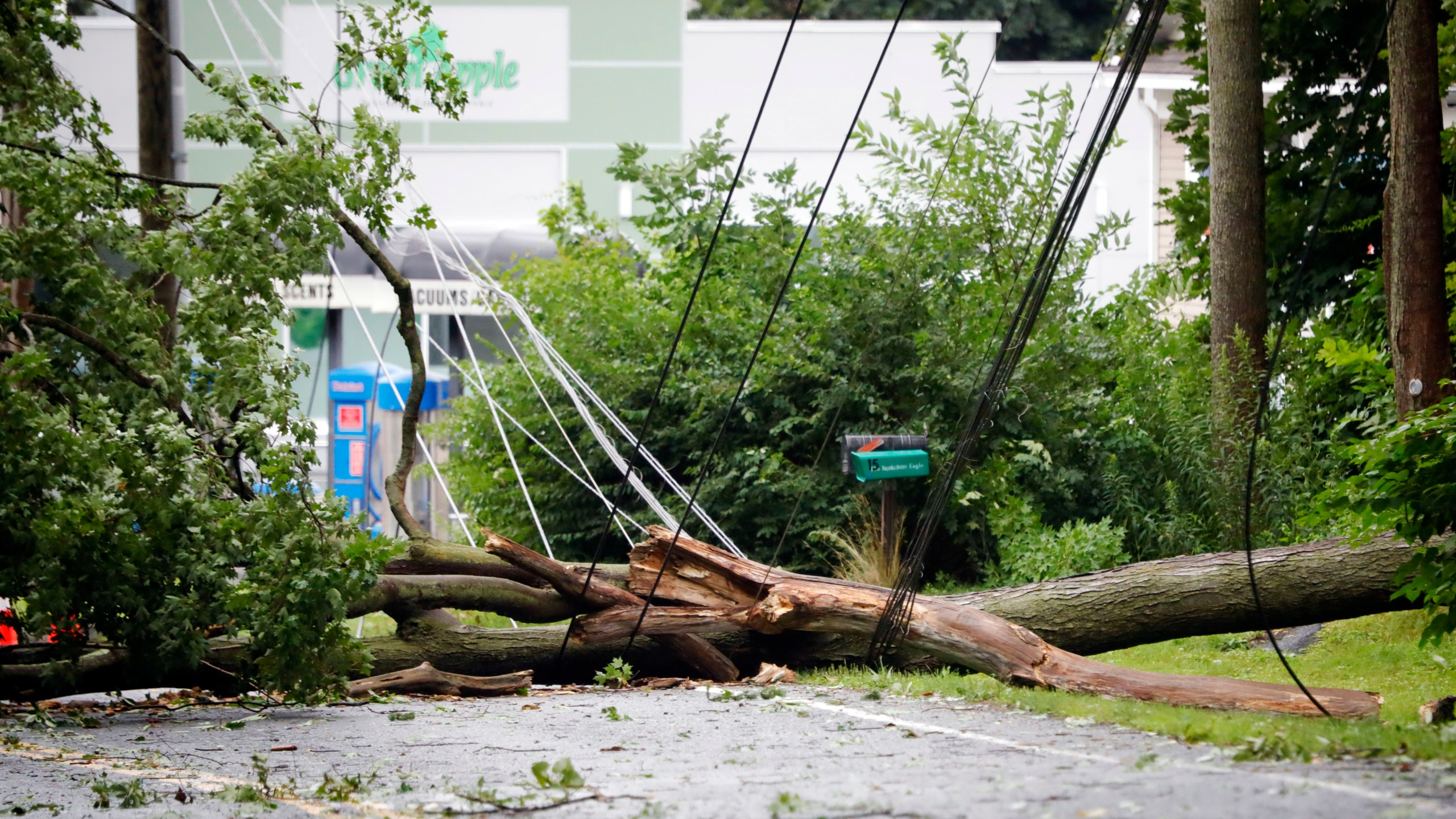 Tree downs power lines in Pittsfield