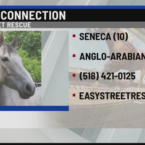 Horse Connection Seneca