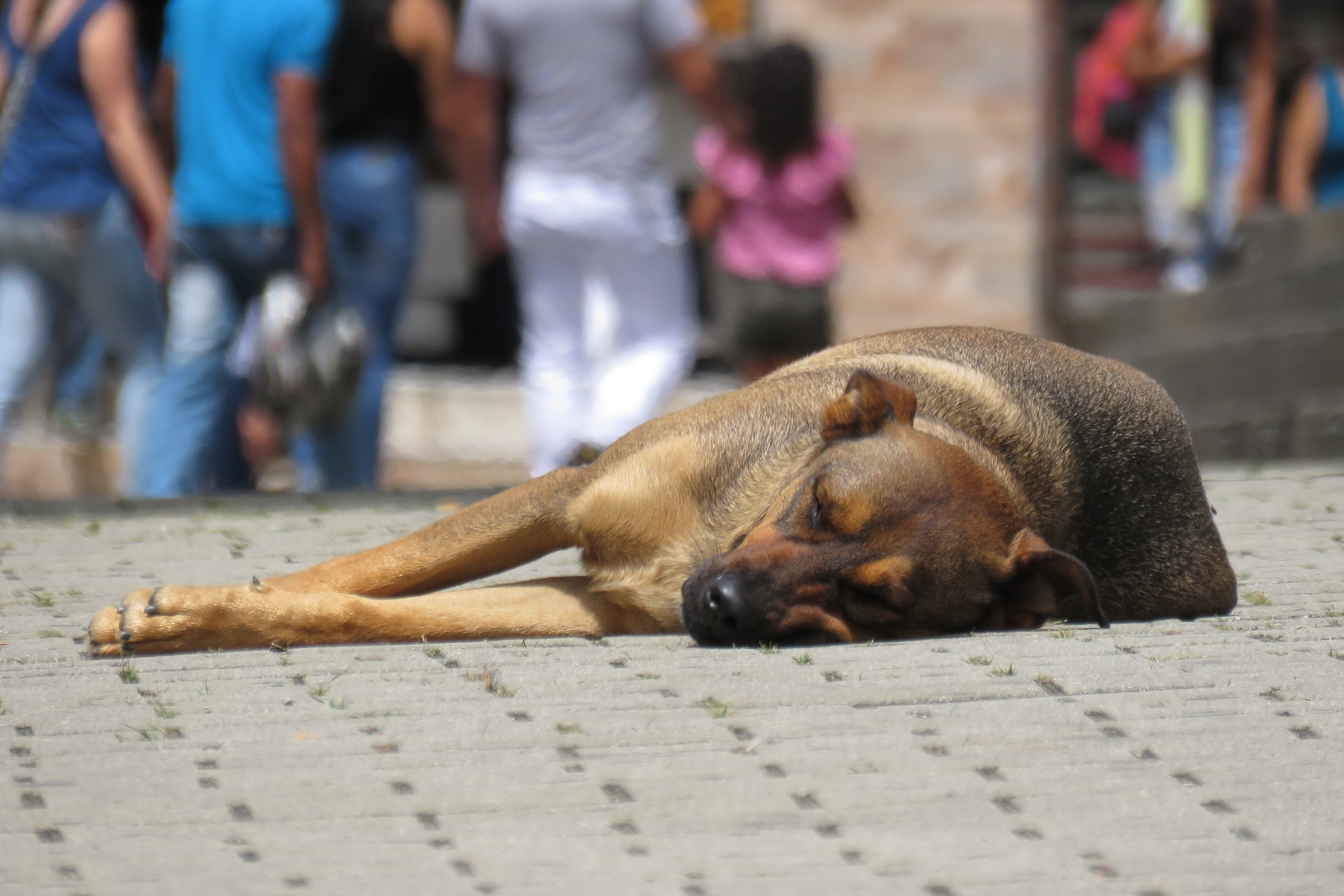 Dog lying on the ground.
