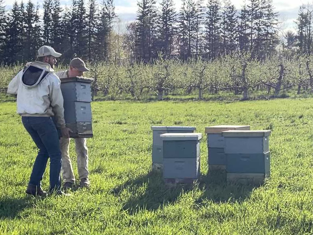 Bees delivered to Indian Ladder Farms.