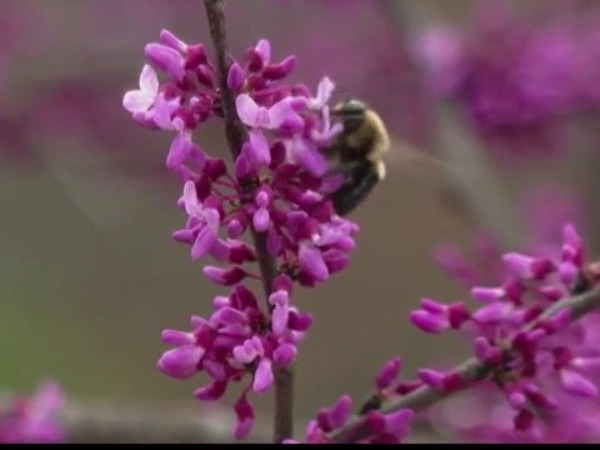 earth day flower bumblebee nature science environment climate