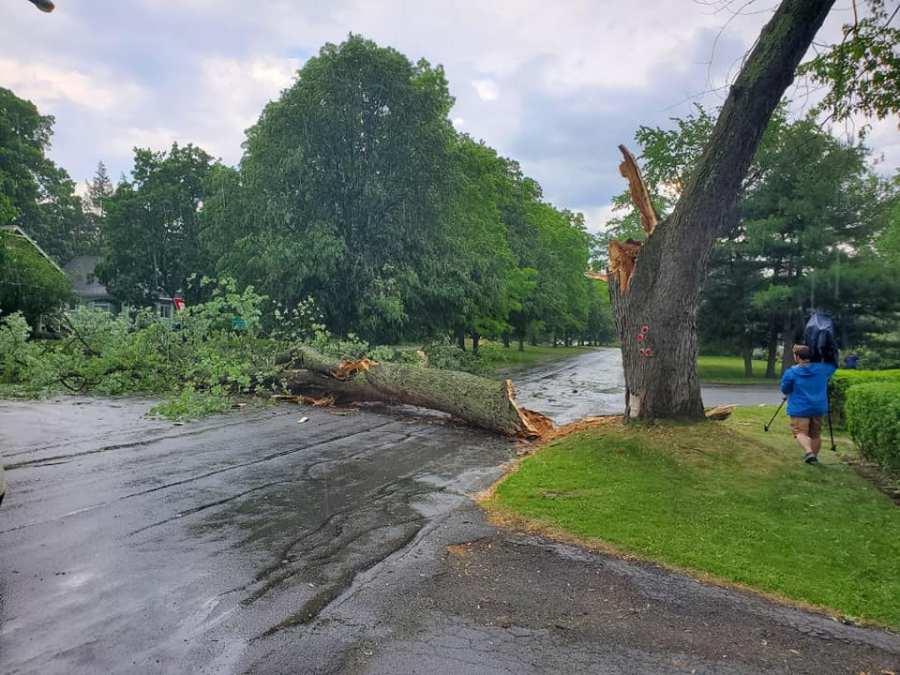 Niskayuna Tree Down