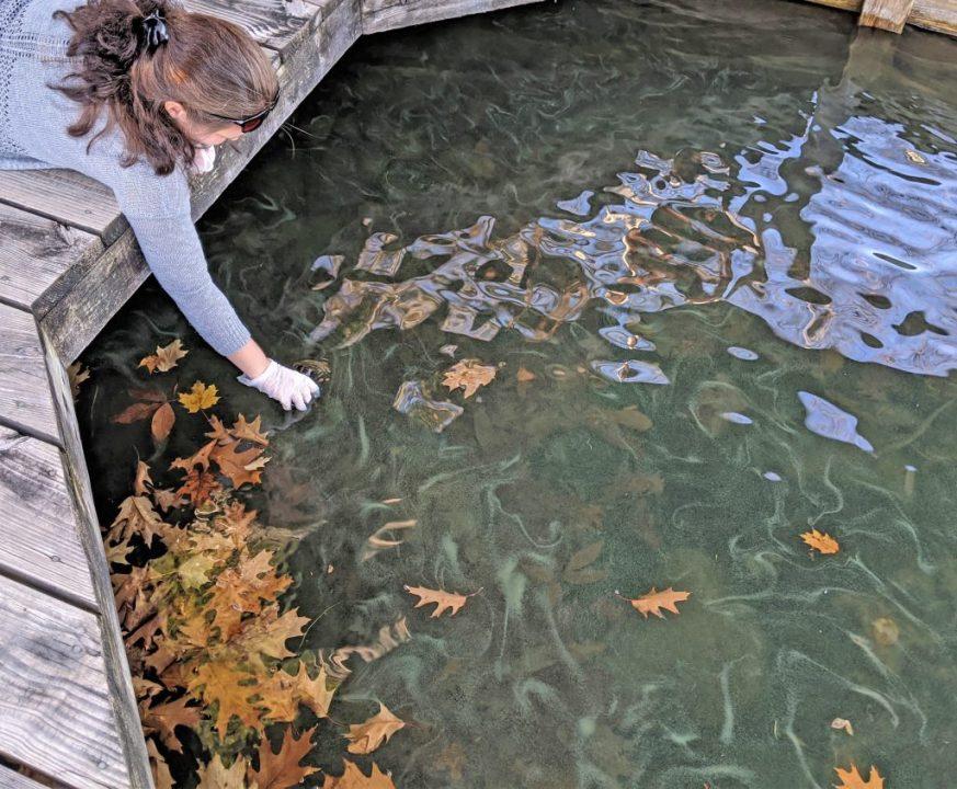 lake George harmful algal bloom