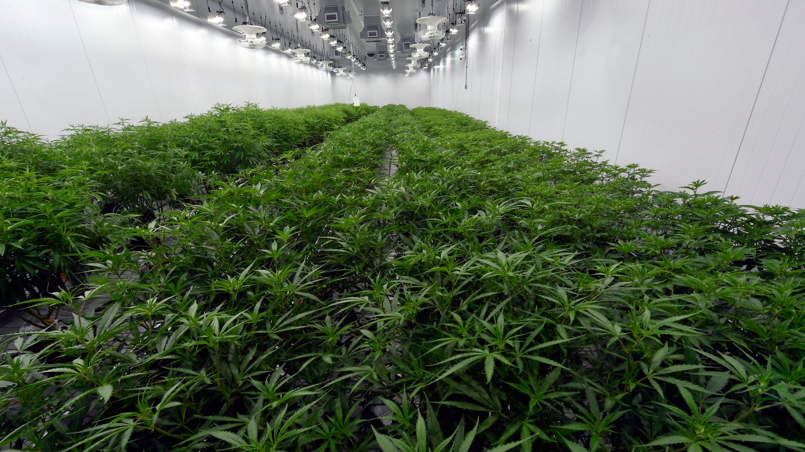 Marijuana Legalization New York