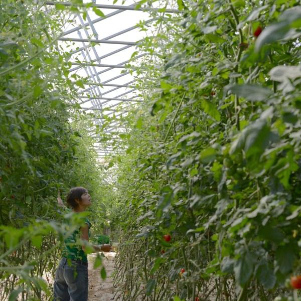 Juniper Hill Farm, Wadhams, New York