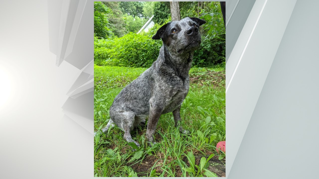 Peaches, a dog nearly decapitated by her previous owner is making a full recovery, according to the Columbia-Greene Humane Society/SPCA.
