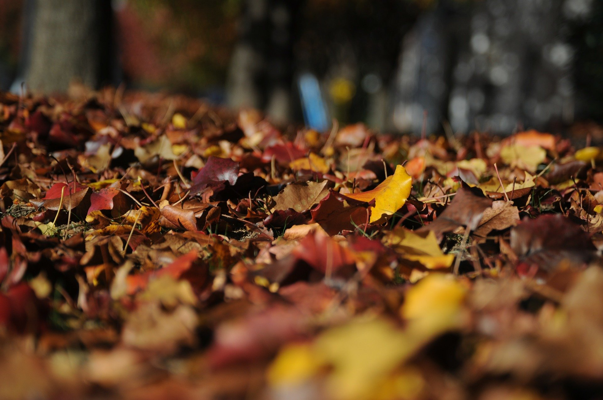 leaves-101329_1920