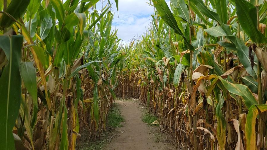 schuyler farms