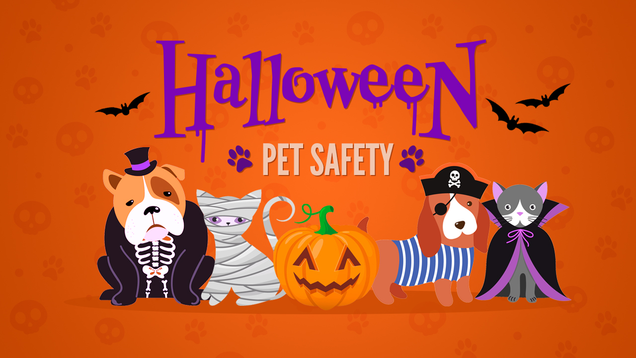 Halloween is for the dogs (and cats)