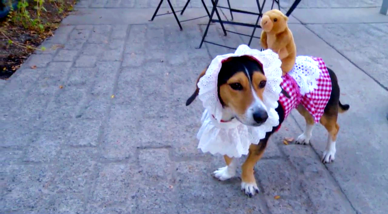 Hounds of Halloween in Downtown Albany